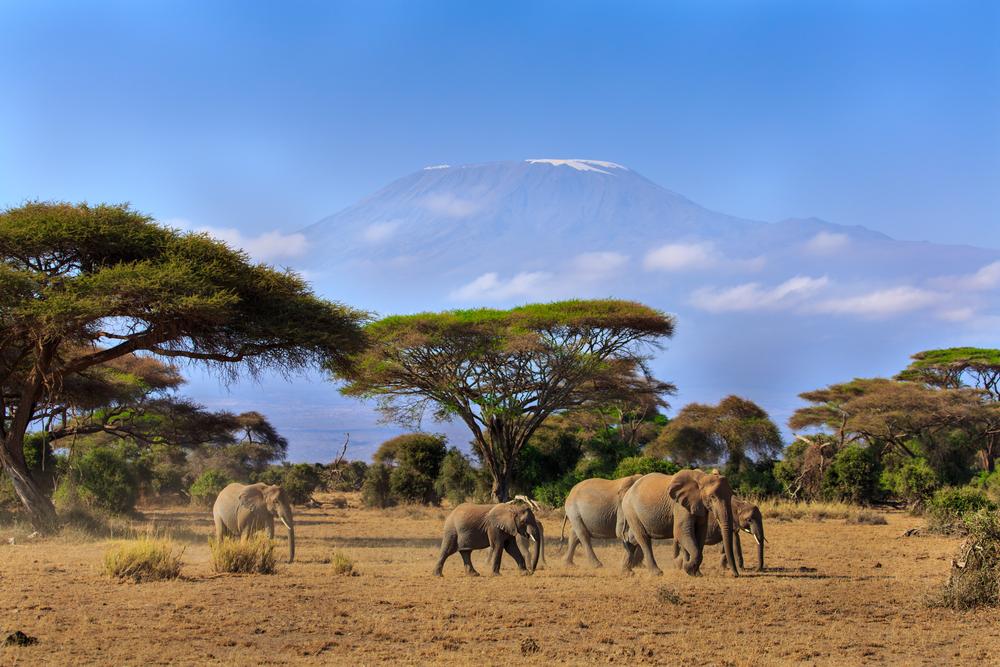 Elephants in front of Mt. Kilimanjaro, Amboseli,
