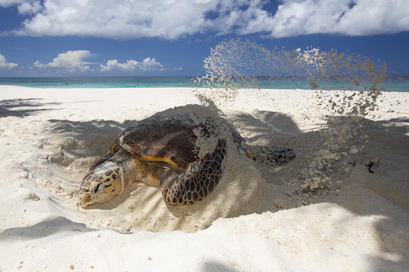 cousine_wildlife-Seychelles-should-be-your-honeymoon-destination