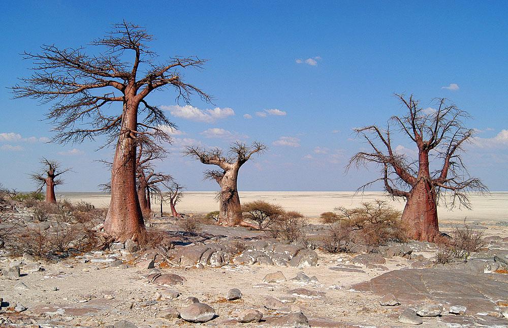 makgadikgadi_pans_national_park