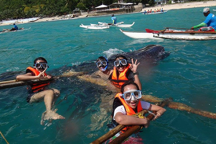 Swimming with whale Sharks in Cebu Philippines