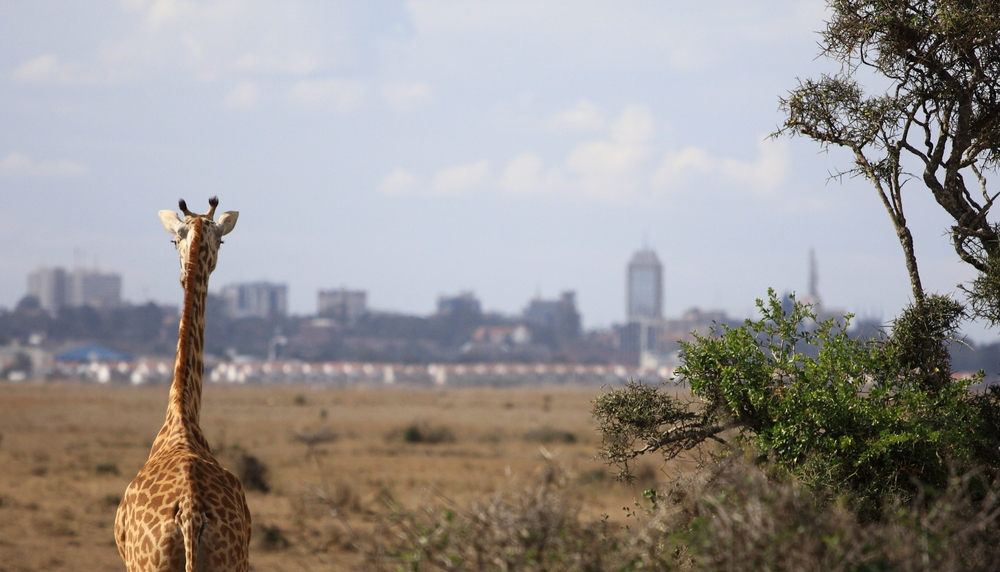 Travel Tips for First Time Visitors to Nairobi