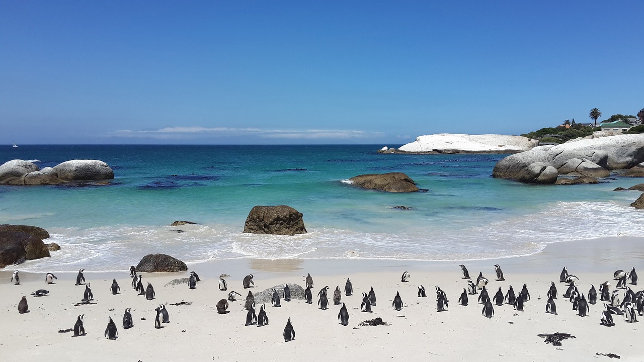 Top Cape Town Attractions